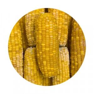 Mrazená kukurica klasy VIKING FROST 10kg 23