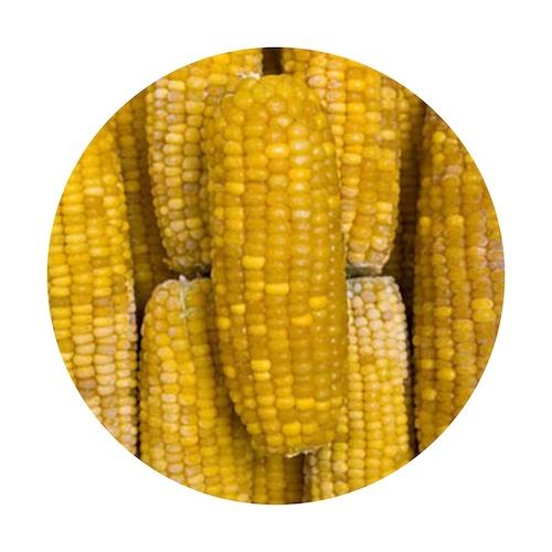 Mrazená kukurica klasy VIKING FROST 10kg 1