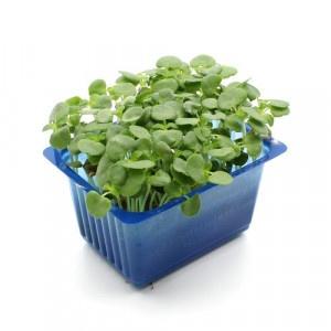 Vňať - Shiso green vanička ,I.Tr 2