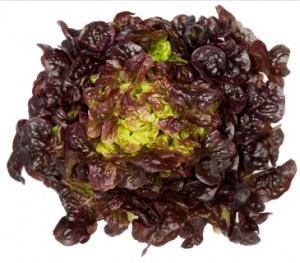 Šalát - Dubový list červený kal.130+,I.Tr 4