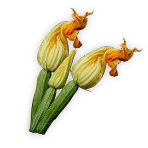 Cuketové kvety 2