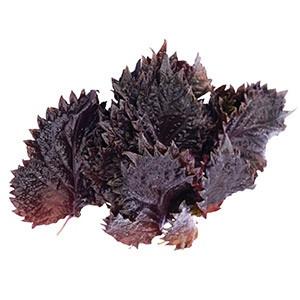 Vňať - Shiso Leaves červené ,I.Tr 12