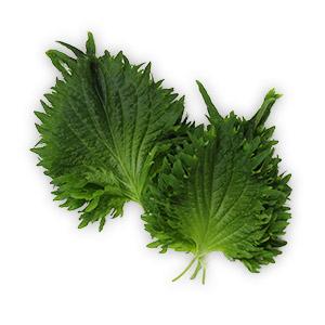 Vňať - Shiso Leaves zelené ,I.Tr 1