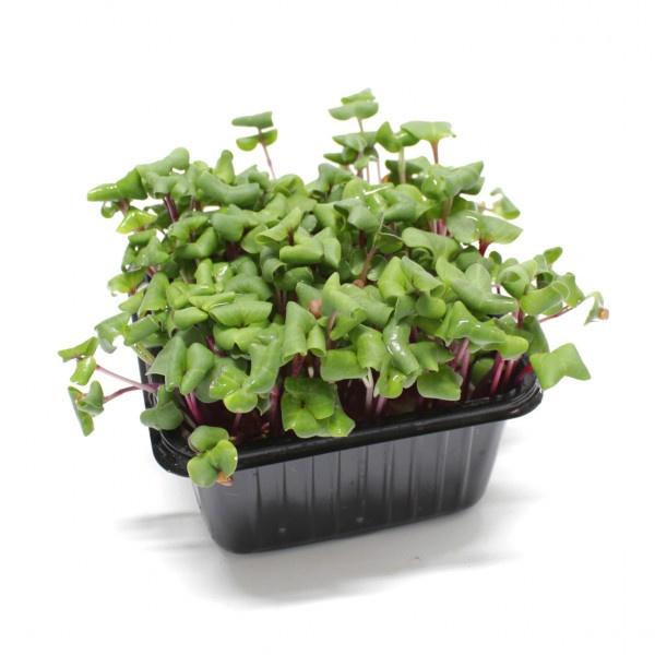 Vňať - Reďkovka cress Redieschen Sangria Herbeus 1