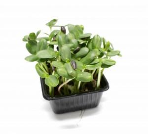 Vňať - Slnečnica cress Sonneblumen Herbeus 7