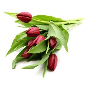 Kytica čerstvých kvetov, Tulipány 7 ks 12